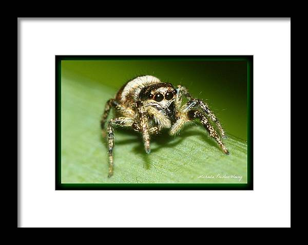 Nature Framed Print featuring the photograph Jumping Spider by Michaela Preston