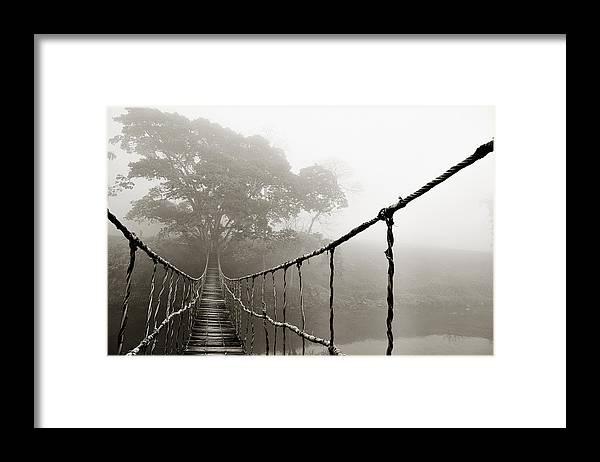 Rope Bridge Framed Print featuring the photograph Jungle Journey 6 by Skip Nall