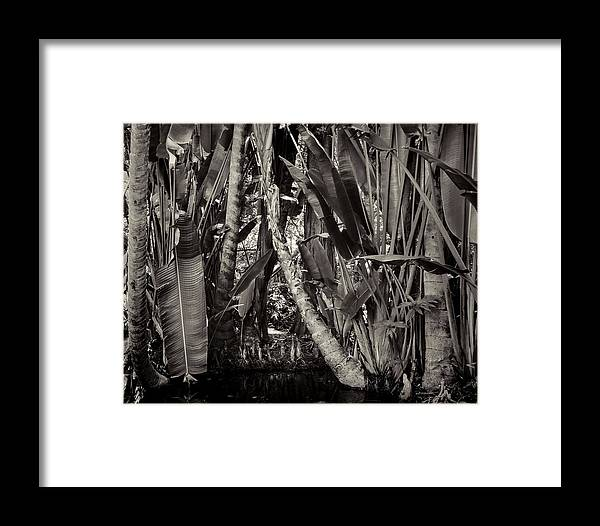 Jungle Framed Print featuring the photograph Jungle by Rudy Umans