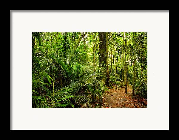 Forest Framed Print featuring the photograph Jungle Scene by Les Cunliffe