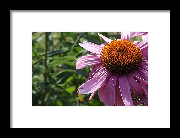 Just Framed Print featuring the photograph Just Another Pretty Face by Elizabeth Sullivan