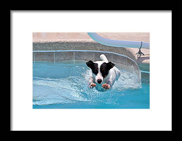 Super Dog Framed Print featuring the photograph Just Jack by Davids Digits