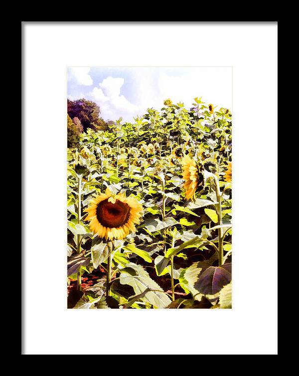 Floral Framed Print featuring the photograph Just Look At Me by Jan Amiss Photography