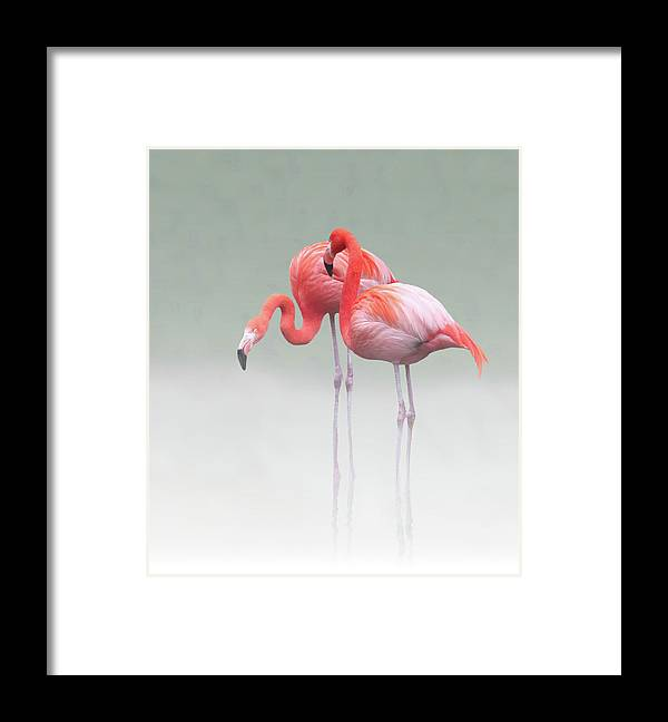 Nature Framed Print featuring the photograph Just We Two ... by Anna Cseresnjes