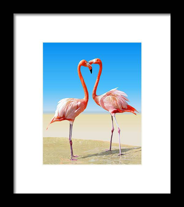 Flamingo Framed Print featuring the photograph Just We Two by Kristin Elmquist
