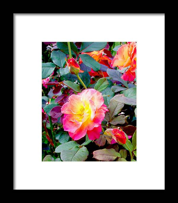 Roses Framed Print featuring the photograph Kaleidoscope Of Roses by Dawn Gagnon