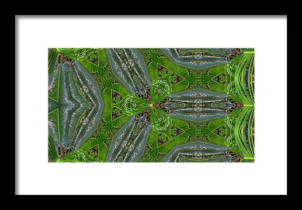 Framed Print featuring the photograph Kalido Plant Fronds by Sarah Houser