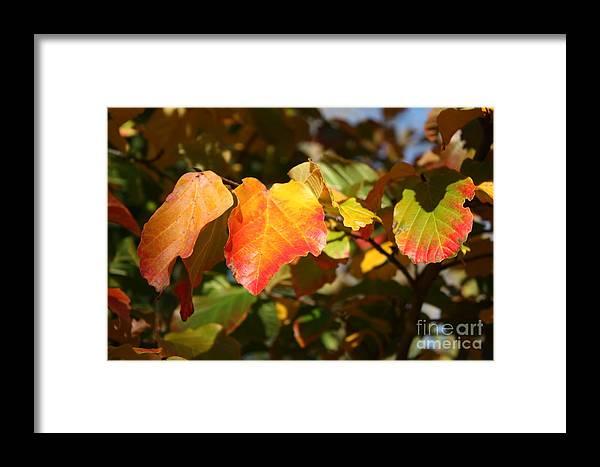 Fall Framed Print featuring the photograph Kansas Fall Leaves Close Up by Robert D Brozek