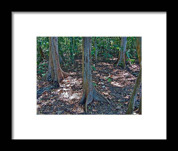 Kapok Trees Along The Trail In Manuel Antonio National Preserve In Costa Rica Framed Print featuring the photograph Kapok Trees Along The Trail In Manual Antonio National Preserve-costa Rica by Ruth Hager
