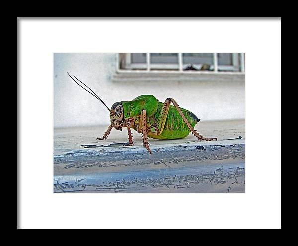 Bush Crickets Framed Print featuring the photograph Katydid by Taiche Acrylic Art