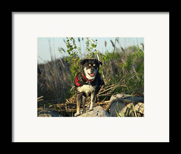 Peterson Nature Photography Framed Print featuring the photograph Kayaker's Best Friend by James Peterson