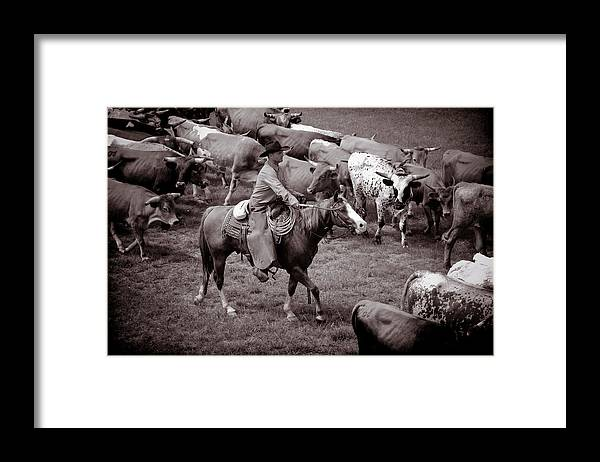Cowboy Photograph Framed Print featuring the photograph Keep em moving by Toni Hopper
