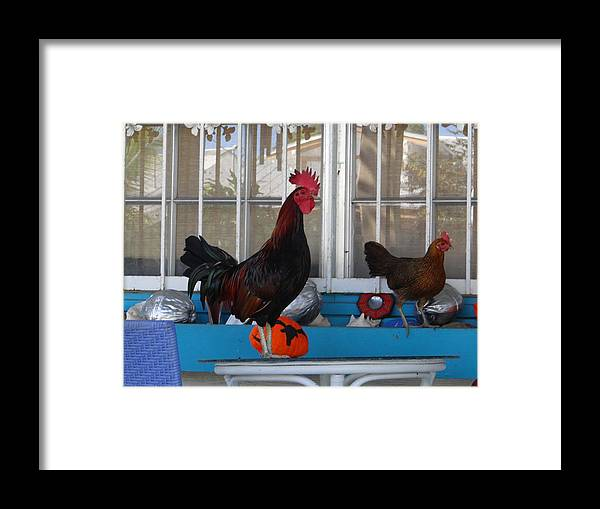 Key West Framed Print featuring the photograph Key West Rooster by Keith Stokes