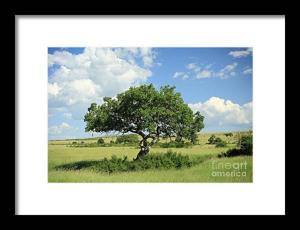Africa Framed Print featuring the photograph Kigelia Pinnata Tree by Deborah Benbrook