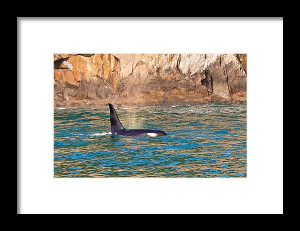 Framed Print featuring the photograph Killer Whale by Richard Jack-James