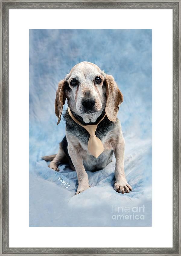 Kippy Beagle Senior And Best Dog Ever Framed Print By Iris Richardson