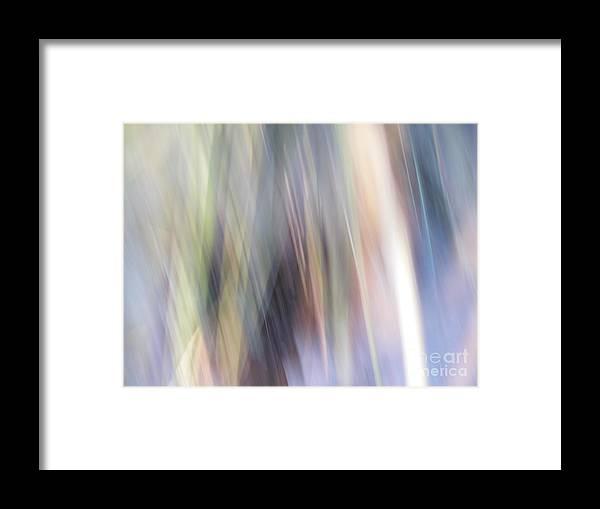 Kito San Framed Print featuring the photograph Kito San by Ofer MizraChi
