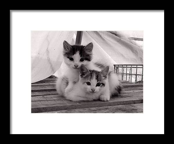 Cat Framed Print featuring the photograph Kitten Cuddles by Mika Kurosaki