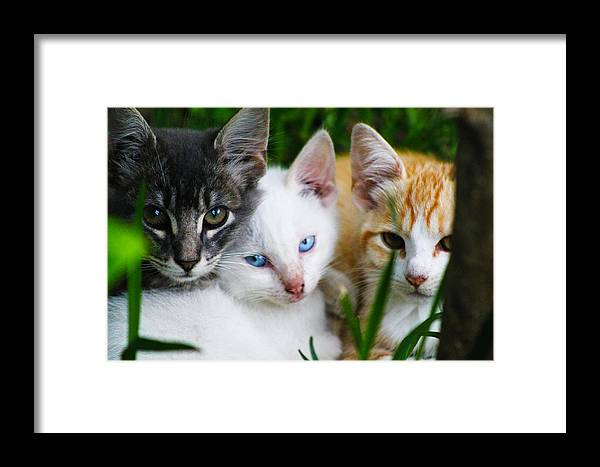 Kittens Framed Print featuring the photograph Kittens In The Cradle by Elijah Gomez