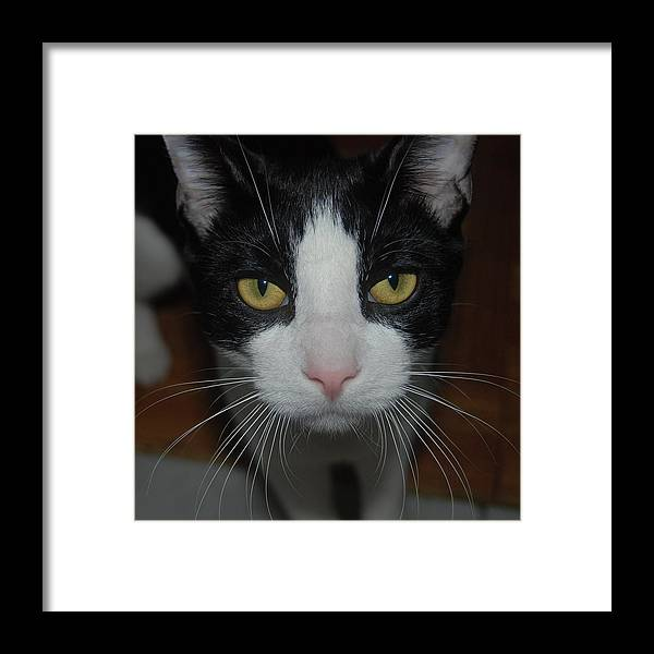 Cat Framed Print featuring the photograph Kitty Cat by Philip Ralley