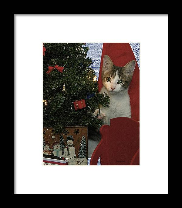 Animals Framed Print featuring the photograph Kitty Says Happy Holidays by Thomas Woolworth