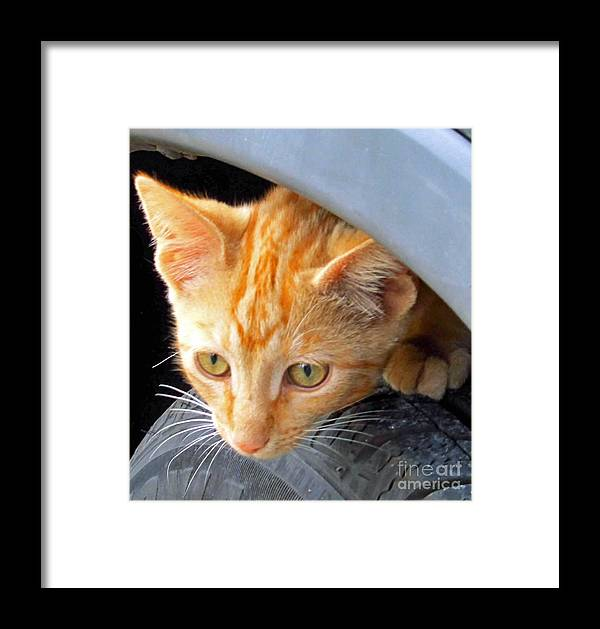 Kittens Framed Print featuring the photograph Kitty Under The Hood by Tina M Wenger