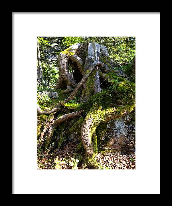 Knarly Framed Print featuring the photograph Knarly Old Tree Stump Switzerland by PIXELS XPOSED Ralph A Ledergerber Photography