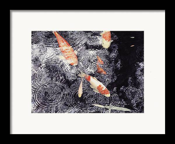 Koi Framed Print featuring the painting Koi In The Rain by Ted Head
