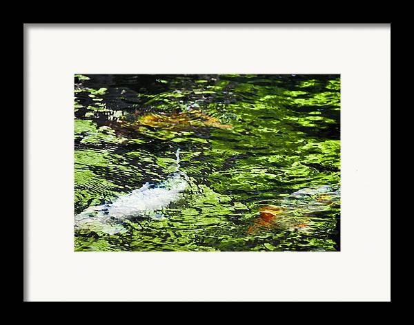 Christi Kraft Framed Print featuring the photograph Koi Pond by Christi Kraft