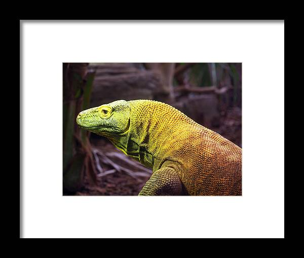 Lizard Framed Print featuring the photograph Komodo Dragon by Susan Tinsley