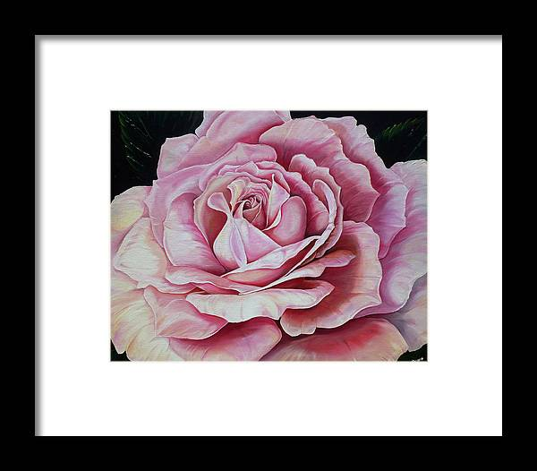 Rose Painting Pink Rose Painting  Floral Painting Flower Painting Botanical Painting Greeting Card Painting Framed Print featuring the painting La Bella Rosa by Karin Dawn Kelshall- Best