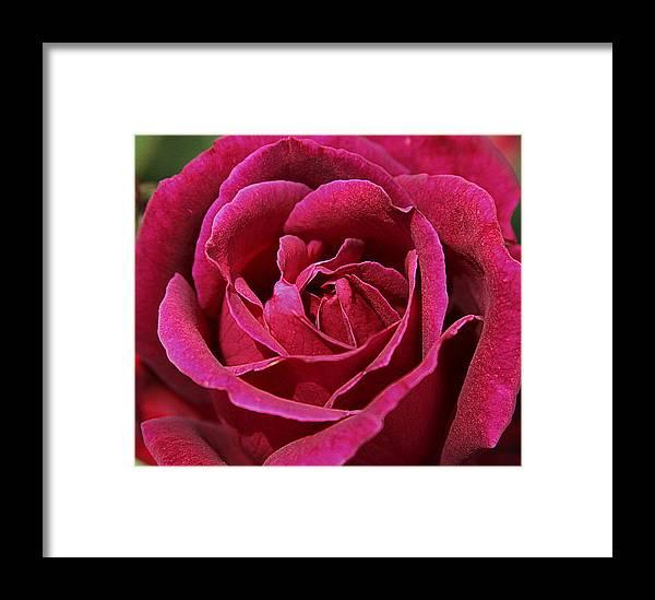 La Fleur De L Amour Framed Print By Greg Thiemeyer