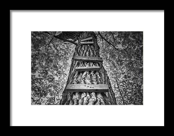 Tree Framed Print featuring the photograph Ladder To The Treehouse by Scott Norris