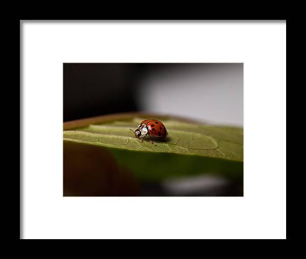 Ladybug Framed Print featuring the photograph Lady by Ryan Brady-Toomey