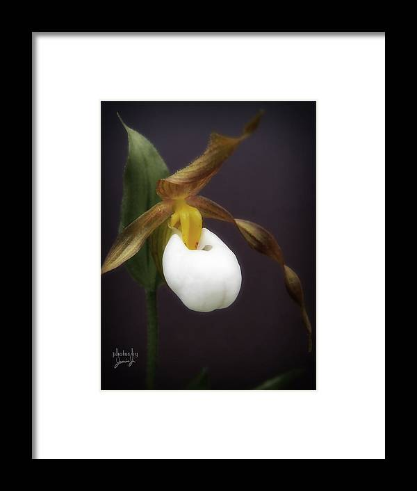 Flower Framed Print featuring the photograph Lady Slipper by Jamie Johnson