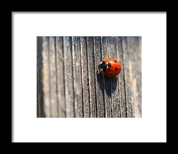 Isolated Framed Print featuring the photograph Ladybug by Maria Angelica Maira