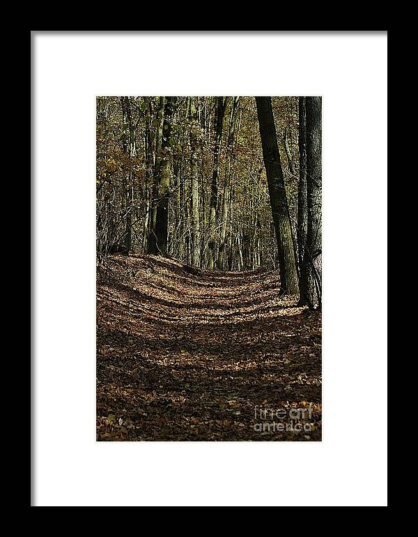 Path Framed Print featuring the photograph Lake Lansing Walk by Joseph Yarbrough