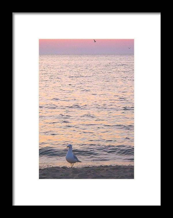 Beautiful Colors Of Lake Michigan Framed Print featuring the photograph Lake Michigan Sunset With Birds by Sylvia Herrington