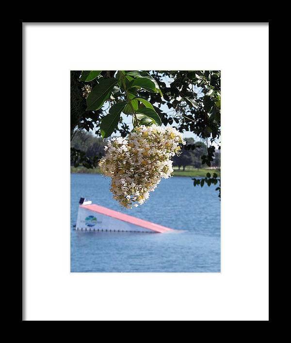 Landscape Photography Framed Print featuring the photograph Lake Silver Tree Flowers by Chris Mercer