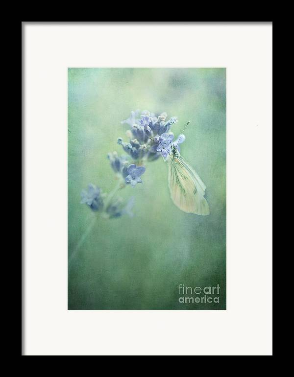 Butterfly Framed Print featuring the photograph Land Of Milk And Honey by Priska Wettstein