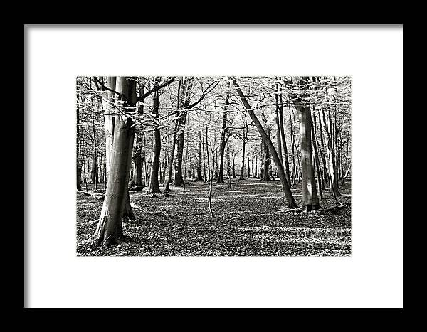 Background Framed Print featuring the photograph Landscape In The Woods by Zuzana Tenhue