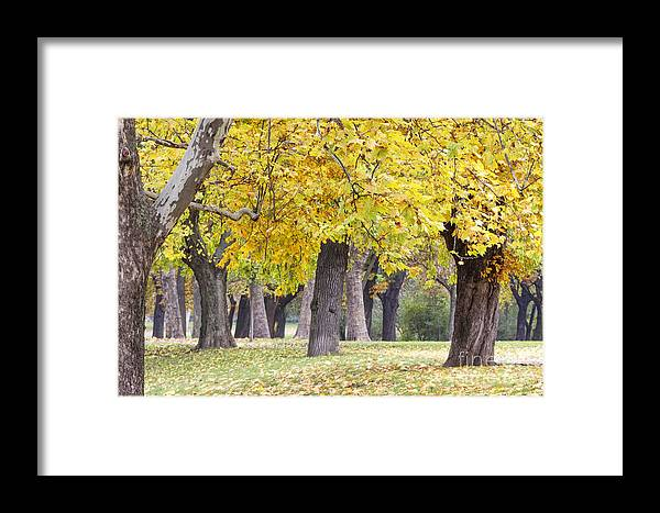 Autumn Framed Print featuring the photograph Landscape With Autumn Trees by Odon Czintos