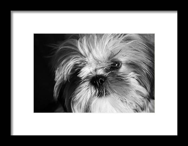 Jezcself Framed Print featuring the photograph Lanny by Jez C Self
