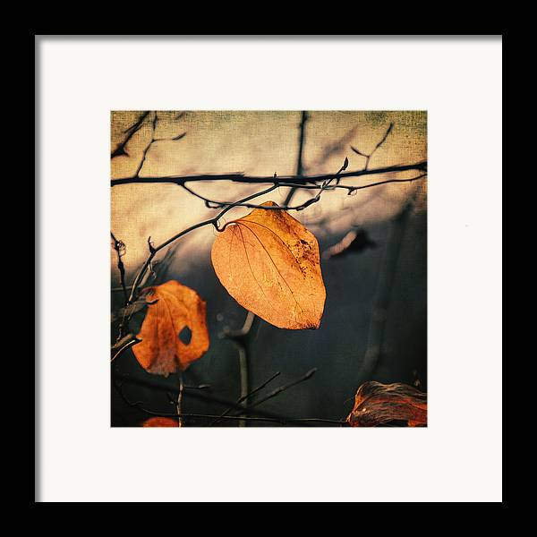 Leaf Framed Print featuring the photograph Last Leaves by Taylan Apukovska