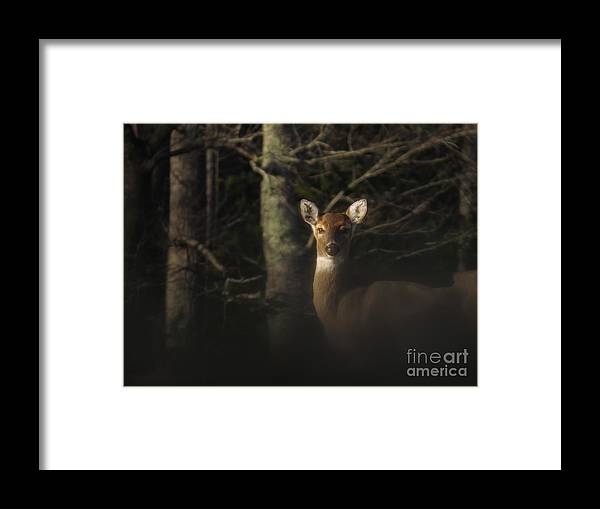 Doe Framed Print featuring the photograph Last look by Rrrose Pix