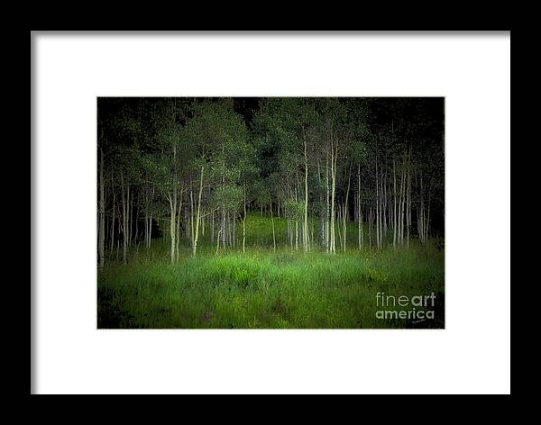 Tree Framed Print featuring the photograph Last Night's Dream by Madeline Ellis