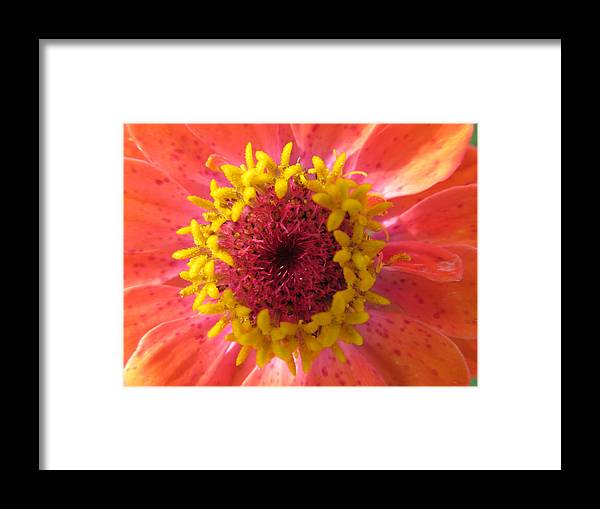 Flowers Framed Print featuring the photograph Last Orange Bloom by Tina M Wenger