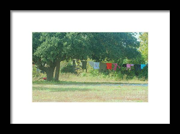 Laundry Framed Print featuring the photograph Laundry Hanging From The Tree by Michelle Powell