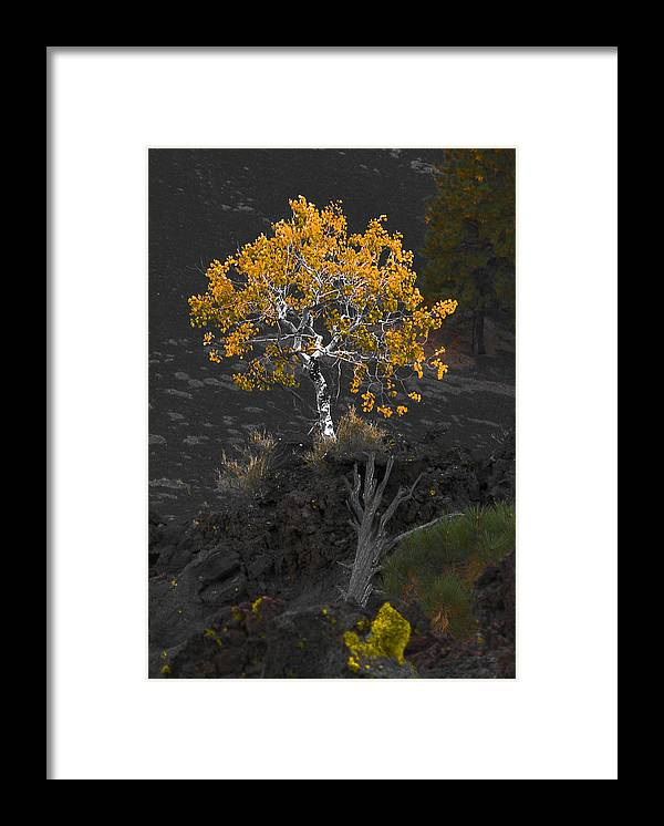 Tree Framed Print featuring the photograph Lava Field by Jim Painter