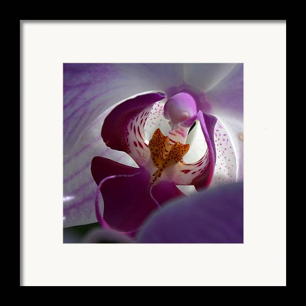 Orchid Framed Print featuring the photograph Lavendar World by AnnaJo Vahle